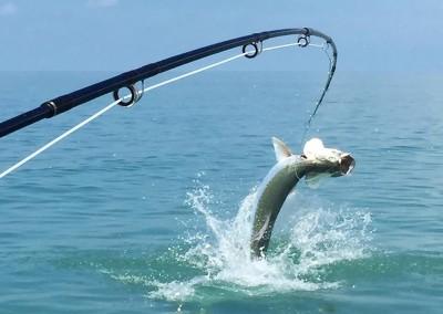 Tampa bay tarpon fishing guides