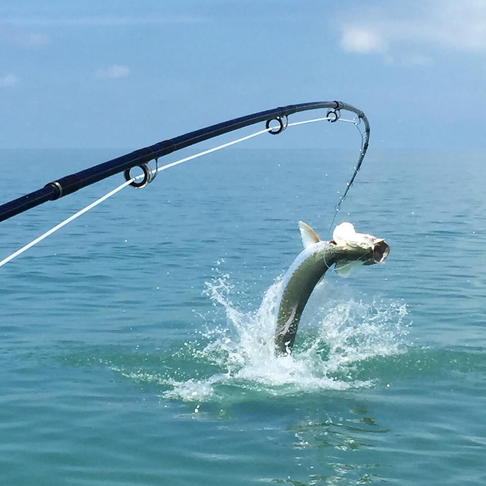 tampa tarpon fishing guides tampa fishing charters