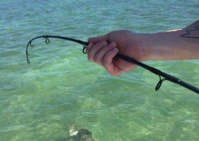 Tampa Bay shark fishing