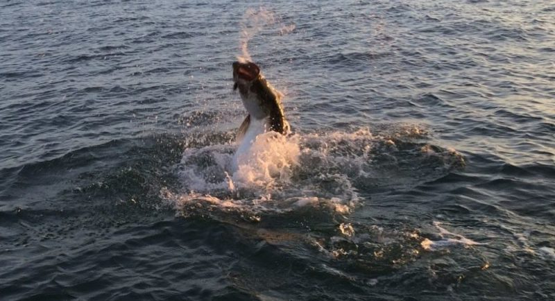 Tampa fishing charters for Tampa fly fishing