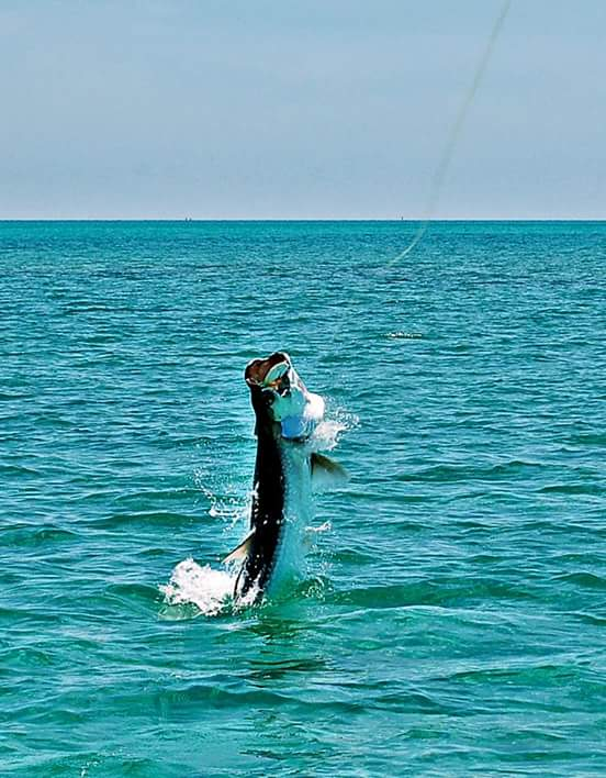 jumping tarpon in Tampa Bay