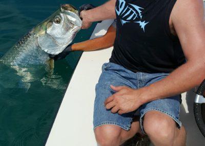 Tarpon Fishing Tampa