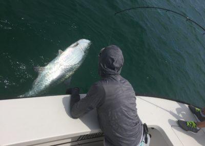 Tampa Fly Fishing Tarpon Guide